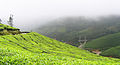 Munnar - views from Munnar (27).jpg