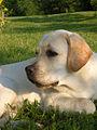My dog Shell.JPG