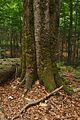 Národná prírodná rezervácia Stužica, Národný park Poloniny (07).jpg