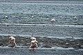 NA-walvisbay-lagoon-famingo.jpg