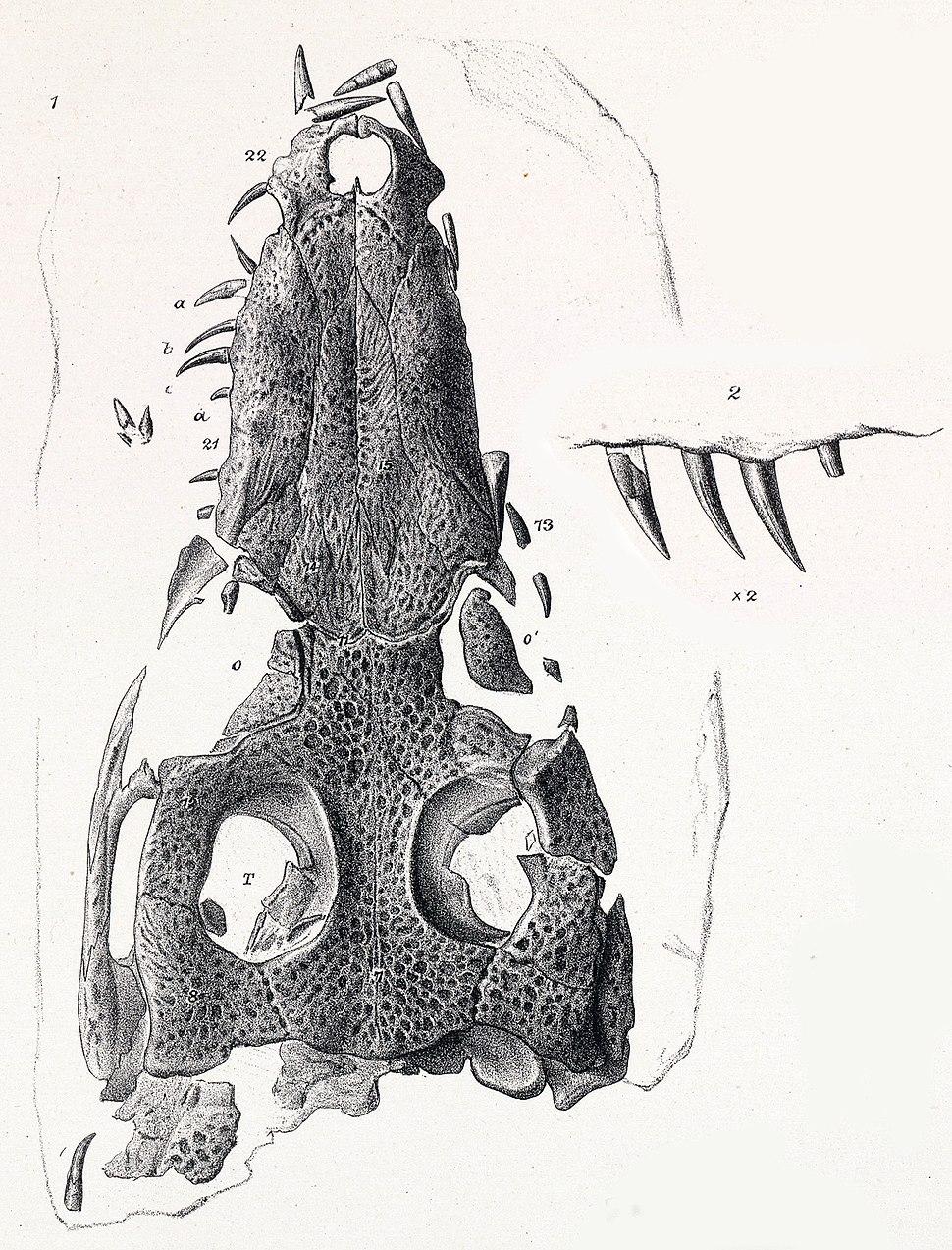 Nannosuchus