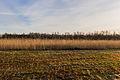 Nationaal Park Weerribben-Wieden. Zompig rietland 01.jpg