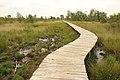 Nationaal park De Groote Peel 15.jpg
