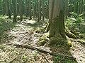 Nationalpark Hainich craulaer Kreuz 2020-06-03 19.jpg