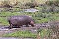 Nature of Ngorongoro Conservation Area (146).jpg