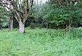 Nature reserve Prameniště (22).jpg