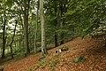 Nature reserve Vlčí důl in autumn 2014 (5).JPG