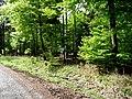 Naturpark Arnsberger Wald fd (22).jpg