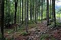 Naturschutzgebiet Kaiserbachtal am Wilden Kaiser in Kirchdorf in Tirol in 2016 (10).JPG