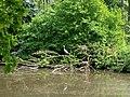 Natuurpark Lelystad - Ardea cinerea v2.jpg