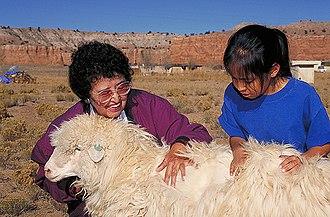 Cornfields, Arizona - A Navajo woman shows the long, dense wool of a Navajo-Churro ewe to a Navajo girl.
