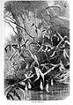 Nepenthes distillatoria - Pflanzenleben.jpg