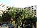 Nice - panoramio (4).jpg
