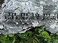 Nikopolis ad Istrum near Nikyup - panoramio (7).jpg