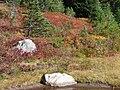 Nisqually Vista trail in mid September 2015. (4f7b95c247fe4e45b9778ec41c3b5633).JPG