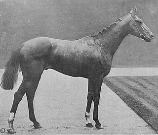 Norman (horse) American-bred Thoroughbred racehorse