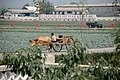 North Korea-Sariwon Migok Farm-02.jpg