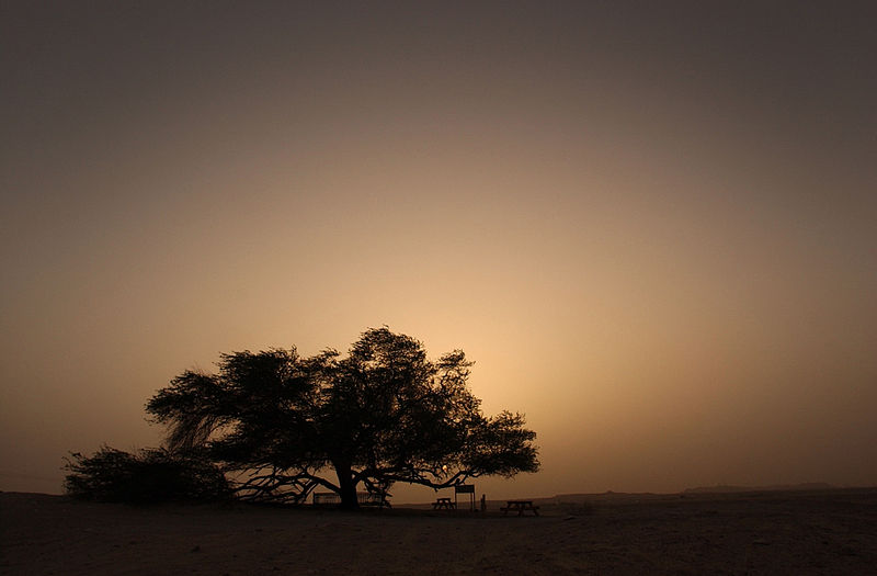 File:Notable Bahrain tree.jpg