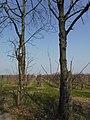 Obstplantage Dohna (1).jpg