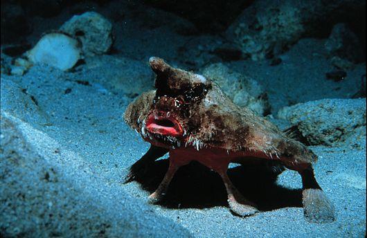 фото самых ужасных обитателей морей океанов