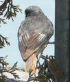 Oiseau-zarb-1.jpg