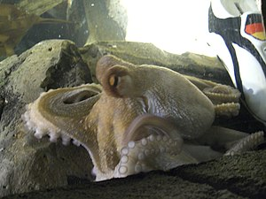 Sea Life Centres - Paul the Octopus