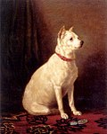 Old English White Terrier.jpg