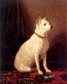 Old English White Terrier por Alfred de Prades