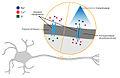 OptogenéticaMétodo.jpg