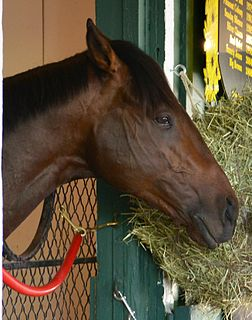Orb (horse) American-bred Thoroughbred racehorse