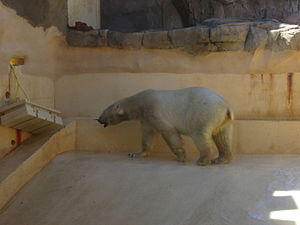 Marineland of Antibes - The area of the polar bears