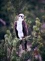 Osprey - Flickr - szeke.jpg