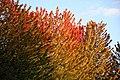 Outono (8091773689).jpg