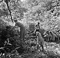 Overste Boogh met een aantal inheemse jongens op zoek naar graven op de voormali, Bestanddeelnr 252-6936.jpg
