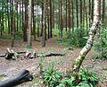 Owlbeech Woods, Horsham, West Sussex - geograph.org.uk - 59871.jpg
