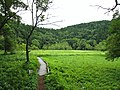 Oyomi Wetland.jpg
