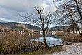 Pörtschach Halbinselpromenade Uferzone mit Weide und Schilfrohr 10012018 2230.jpg