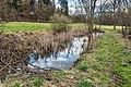 Pörtschach Winklern Brockweg Teich mit Typha latifolia 22032020 8566.jpg