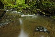 Přírodní rezervace Kavinský potok (07).jpg