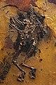 Paleoglaux-artophoron-fossil.jpg