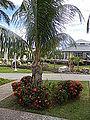 Palma's in Cuba-Laslovarga (6).JPG