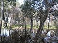 Parc National d'El-Kala 7.JPG