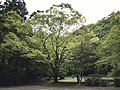 Park near Otometoge St. Mary Church 1.jpg