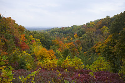 Hill view with orange, red, yellow, and green-leaved trees.