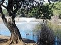 Parque Infanta Elena (Sevilla) 18.jpg