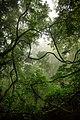 Parque Nacional da Tijuca by Diego Baravelli 01.jpg
