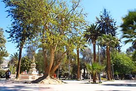 Paseo dia Plaza de Armas de Copiapó.jpg