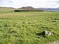 Path from Loch moraig to Carn Liath 1 - geograph.org.uk - 21053.jpg