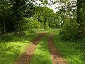 Path through Bulley Wood - geograph.org.uk - 1317241.jpg