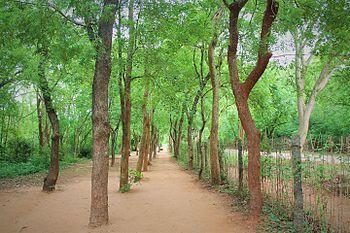 Path to Abundance.jpg